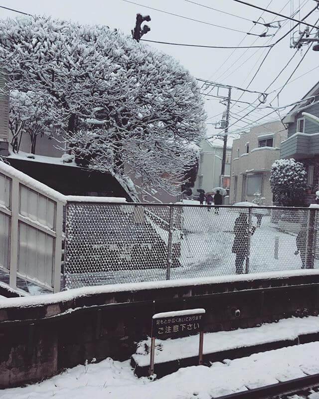 エライこっちゃ!!苦笑#雪 #東京