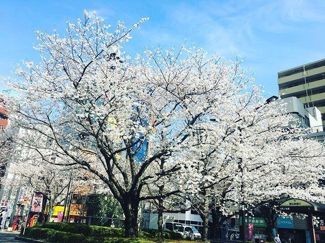 レッスン@駒込 の桜春。それぞれに色んな卒業やスタートや がありますね皆にとって素敵な春になりますように#春 #空 #桜 #街