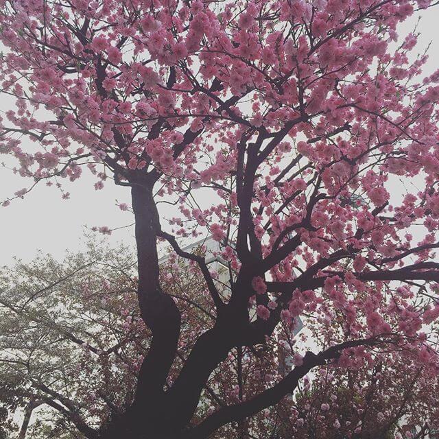 強風・ビル風で吹っ飛ぶかと思った1日。明日は夏日らしいですね??頑張りましょうーーー🤔#春 #桜 #強風 #東京 #TOKYO